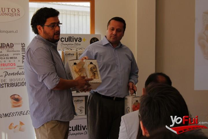 YoFui.com Beneficios del Hongo Ostra con su Kit de autocultivo, Parcela Frutos de Lonquén  (7277)