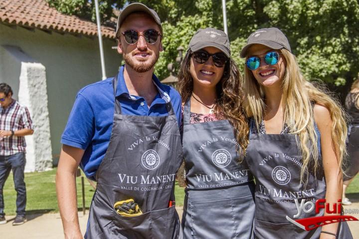 YoFui.com Viu Manent celebra el inicio de la vendimia en Colchagua, Viña Viu Manent  (7369)